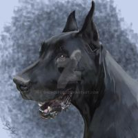 Zeus the Great Dane by SheWolfGeo