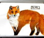 #213 Red fox (vulpes vulpes) by Doodle-of-the-day