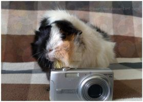 I'm a paparazzi guinea pig! by Lunatic-Hao-ChaN