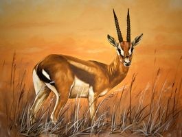 Gazelle 60x80 by lutzmader