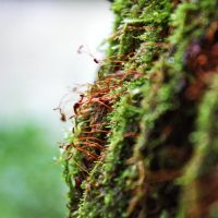 moss by mirop