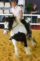STOCK - 2014 Total Equine Expo-69 by fillyrox