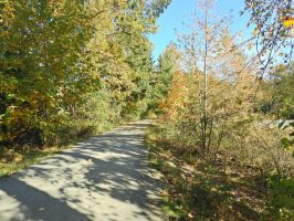 Vedder river trail 10/16/2015~6 by Matthew-Fuller