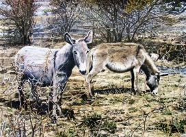 Rural Donkeys by WillemSvdMerwe