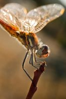dragonfly 2 by scott-leeson