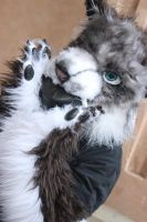fursuit eating a gasmask filter? O,o by WithCandyDancing