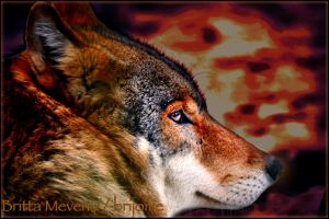 Wolf by brijome