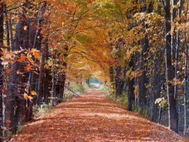 Another fall road by jerrinator