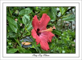 Rainy Day Hibiscus by TThealer56