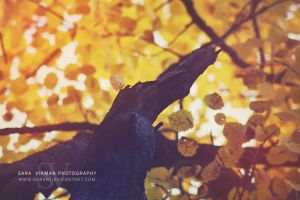 Seasons Cease To Change by Sarawi