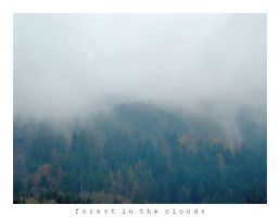 Forest in the Clouds by JonasLuc
