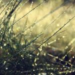 magic grass by Orwald