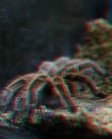 3D spider stereo photo by amirajuli