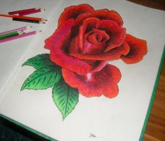 Flower 003 Red rose by The-worst-art