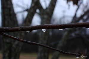 cold winter drops by Philatx