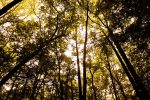 Tree Overhang by Airborne2182