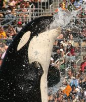 Shamu Splash by I-Heart-Photos