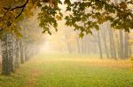 Misty Autumn... _5_ by my-shots