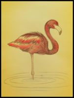 Flamingo! by majann