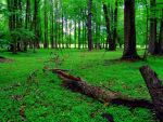 Lush woods by CultureQuest