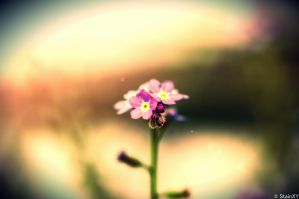 Small Flower by StainXY