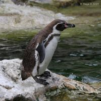 penguin by spiti84