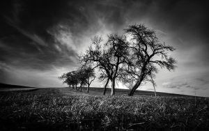 The Eleven Trees by DREAMCA7CHER