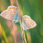 Little Creatures 107 by Frank-Beer