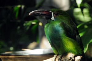 Feathered Emerald by MyReasonInLife