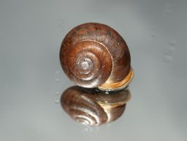 snail shell III by super-chicken-stock