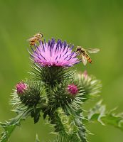 thistle with visitors by marob0501