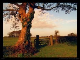 Gate... by Whippeh