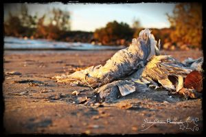 Wings by shahnachristinephoto