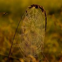the web II by wienwal