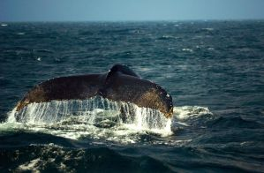 Whale watching by bozonio