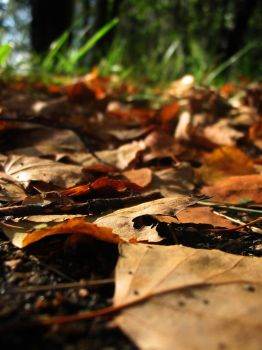 leaves in a forest 2 by CodilX