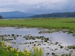 Far Marshes by 3Bitner3