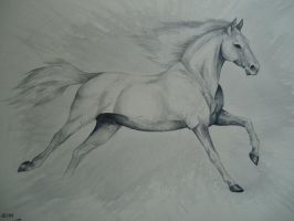 white horse by MartyDeath