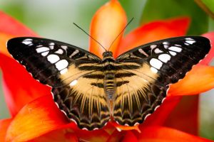 Butterfly I by MarianGutu