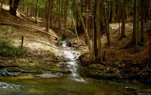 Tributary Color by AliEnX7587
