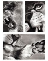 Lion Triptych by bubba-messa