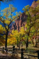 Fall in Zion by aponom