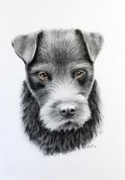 bearded dog by zileart