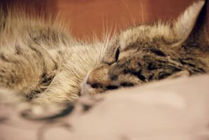 Cat sleeping by SoniaPhotos