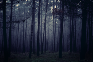 Foggy Forests by Camaryn