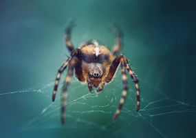 spider 2 by SquadGazZz