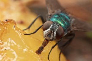 Greenbottle by snomanda