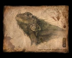 Iguana Wallpaper by Tsabo6