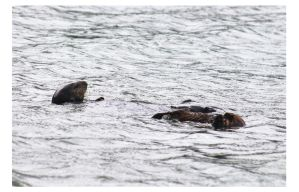 Mothers Day Otters by bensinn