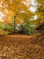 Seasonal Path by FicktionPhotography